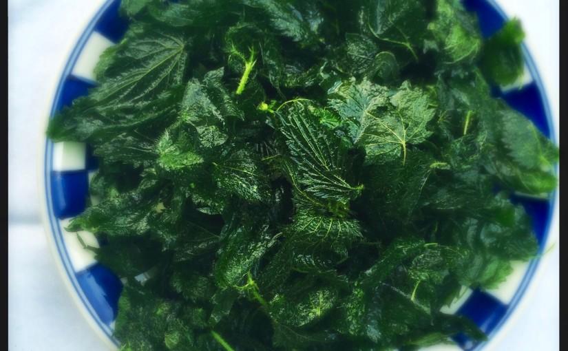 Vom Unkraut zum Superfood: Rezepte mit Brennnesseln